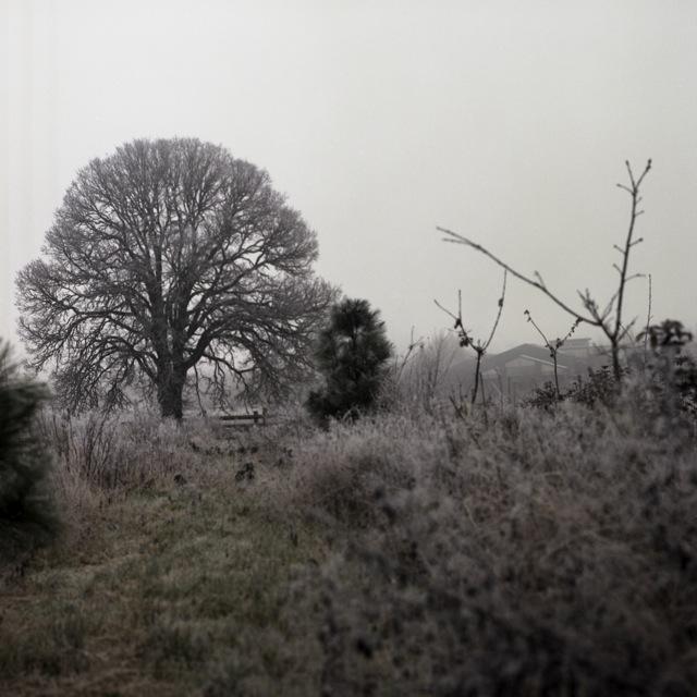 frozen_fog-10