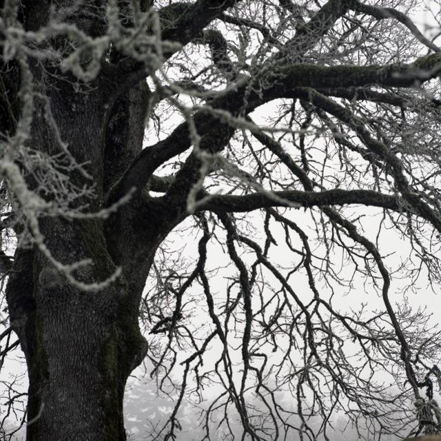 frozen_fog-11