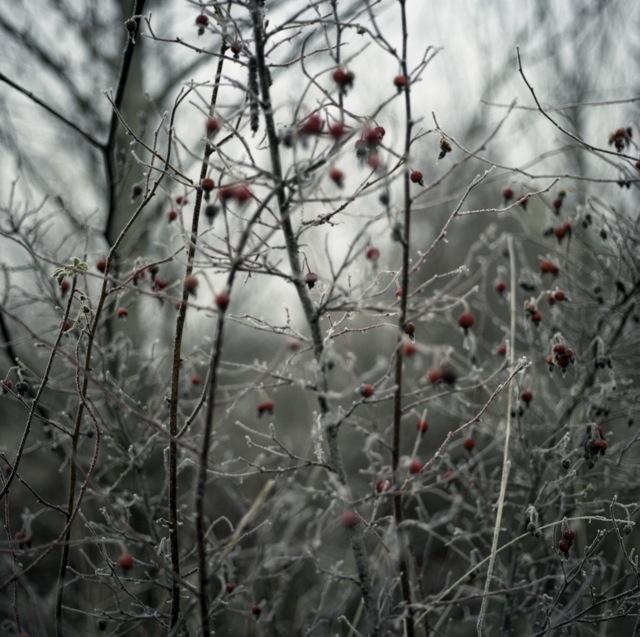 frozen_fog-2