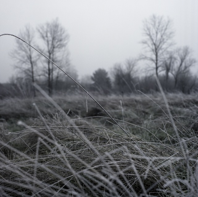 Wilsonville fog