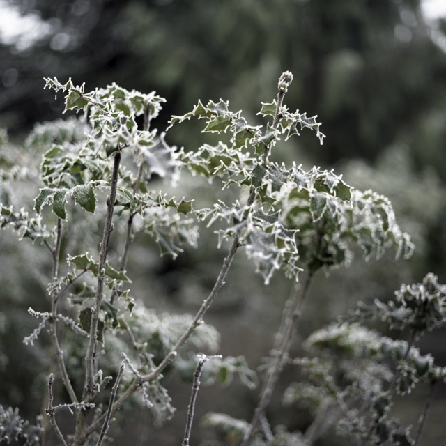frozen_fog-5