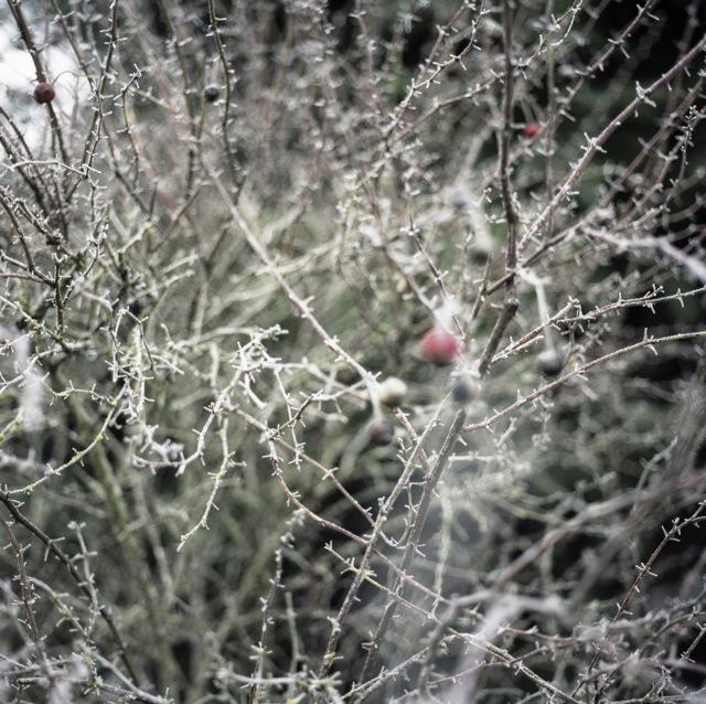 frozen_fog-6