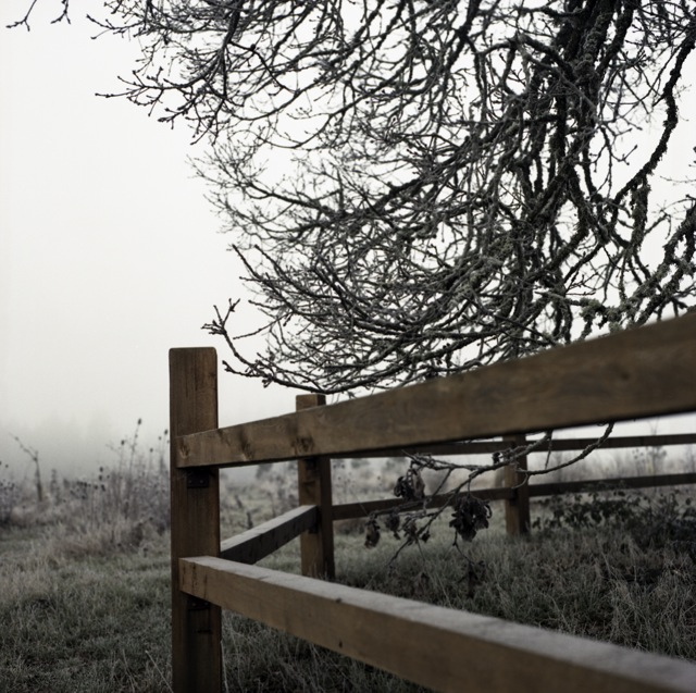 frozen_fog-7