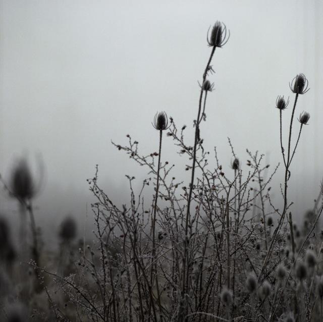 frozen_fog-8