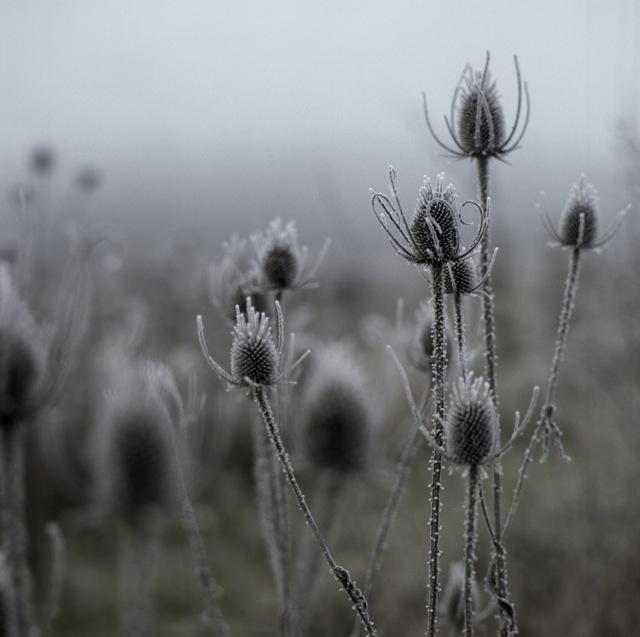 frozen_fog-9