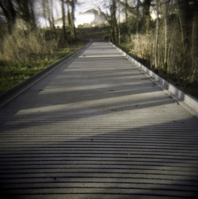 bridge over the wetlands