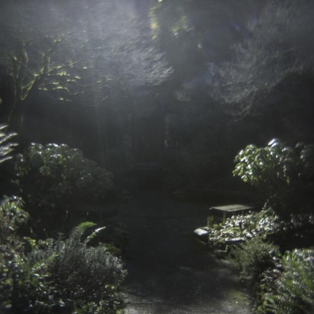 plants_holga338