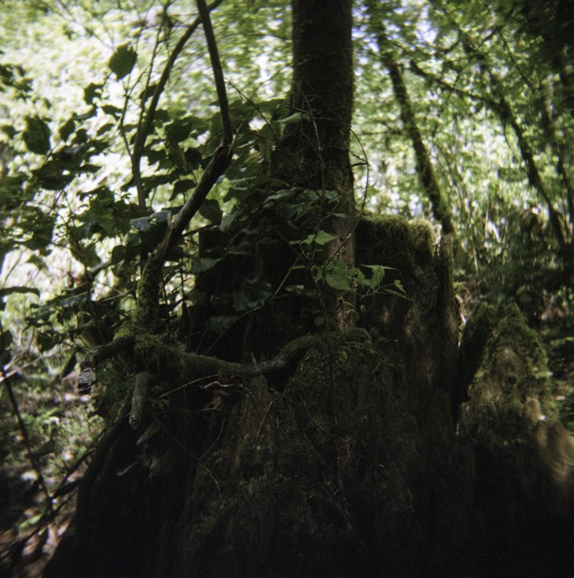 looking for green stumps with my Holga