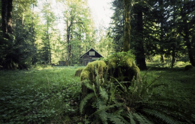 an old cabin in the woods_pinhole_4 minutes