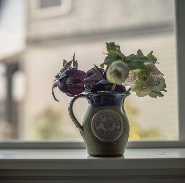 Hellebores on the windowsill