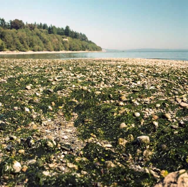 algae and shells