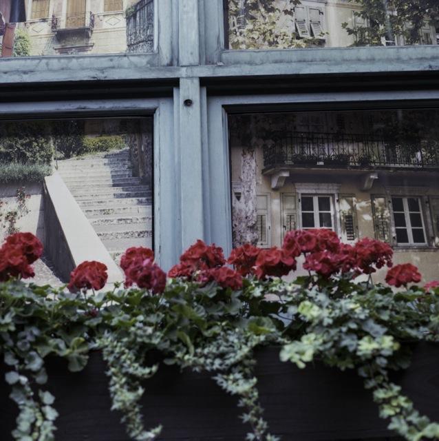 flowering in an alley