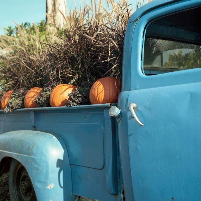 PumpkinPatch_Hassie720