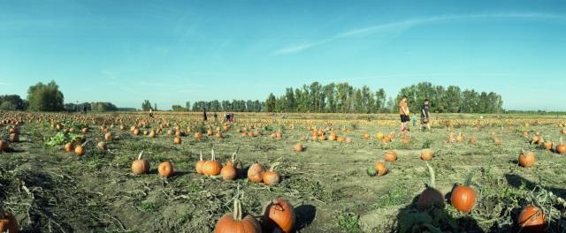 PumpkinPatch_HolgaPan732