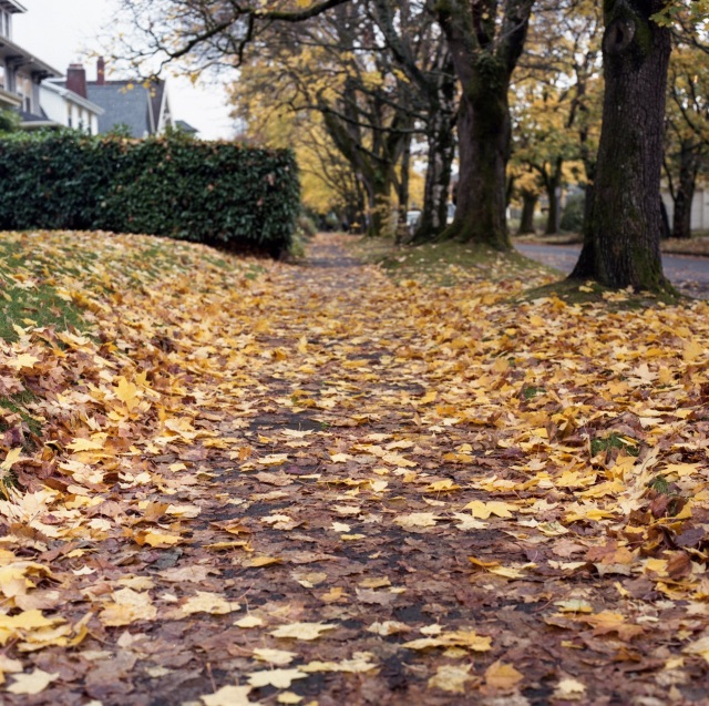 shuffling through the leaves in Ladd's Addition
