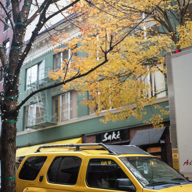 yellow tree, yellow awning and yellow leaves