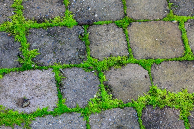 moss on patio