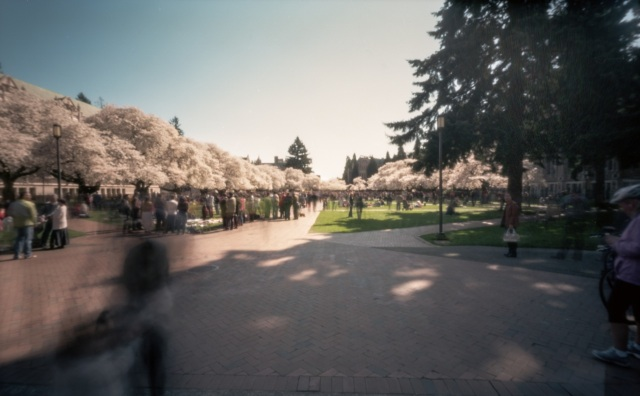 UofWcherrytree_pinhole971-Edit