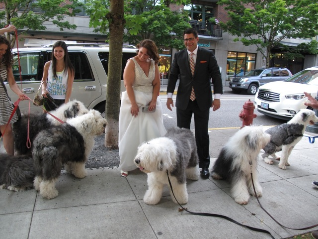 a passing wedding party had their photos taken with the dogs.