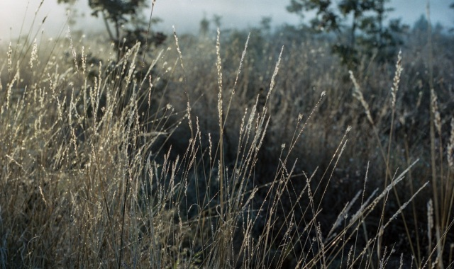 dew on the dry grasses