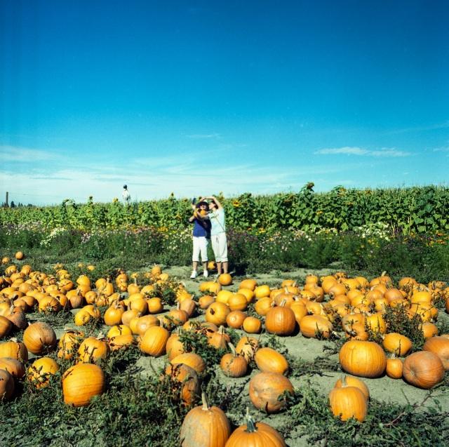 pumpkins_Hassie362