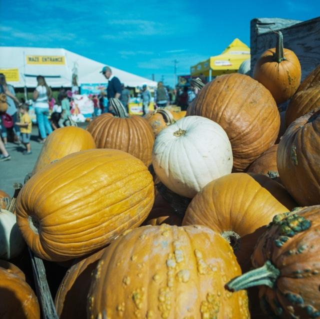 pumpkins_Hassie365