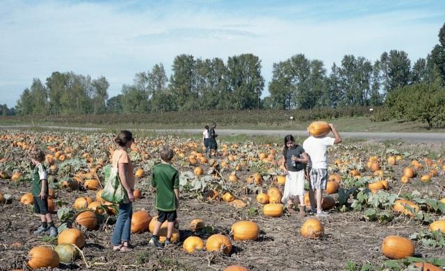 chossing a pumpkin