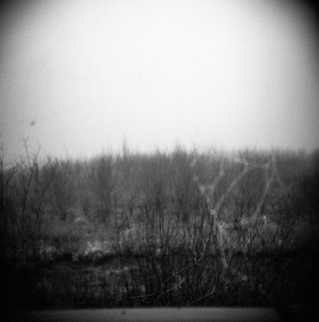 blurry spider web across the wet lands