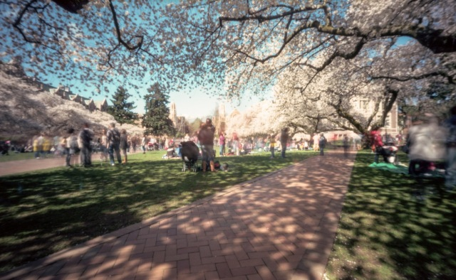 UofWcherrytree_pinhole977-Edit-2-2