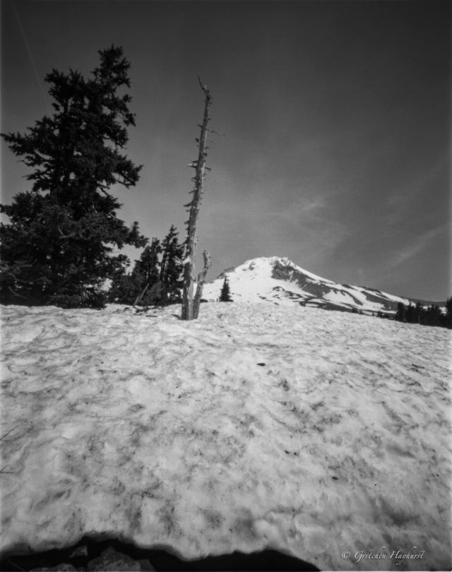 _timberline-5-19180
