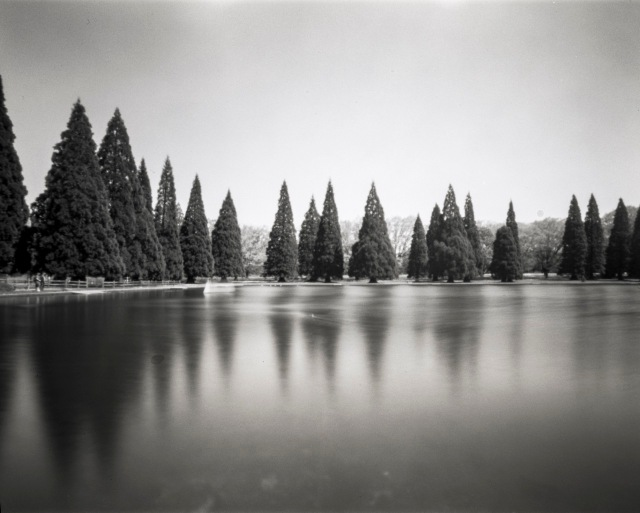 Trees_WPPD_Titan4x5147