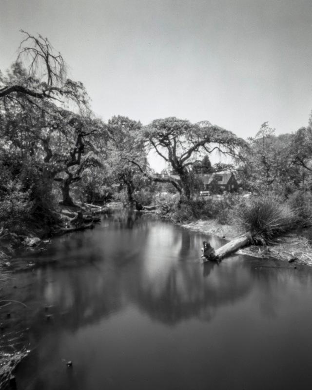 TreesofSalRiv_Titan4x5144