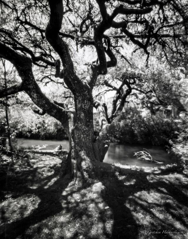 TreesofSalRiv_Titan4x5142